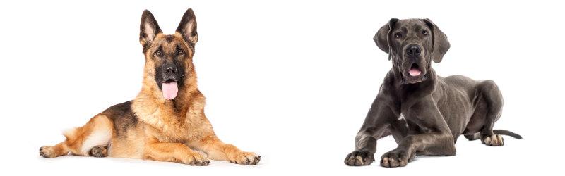 Goosco best dog products